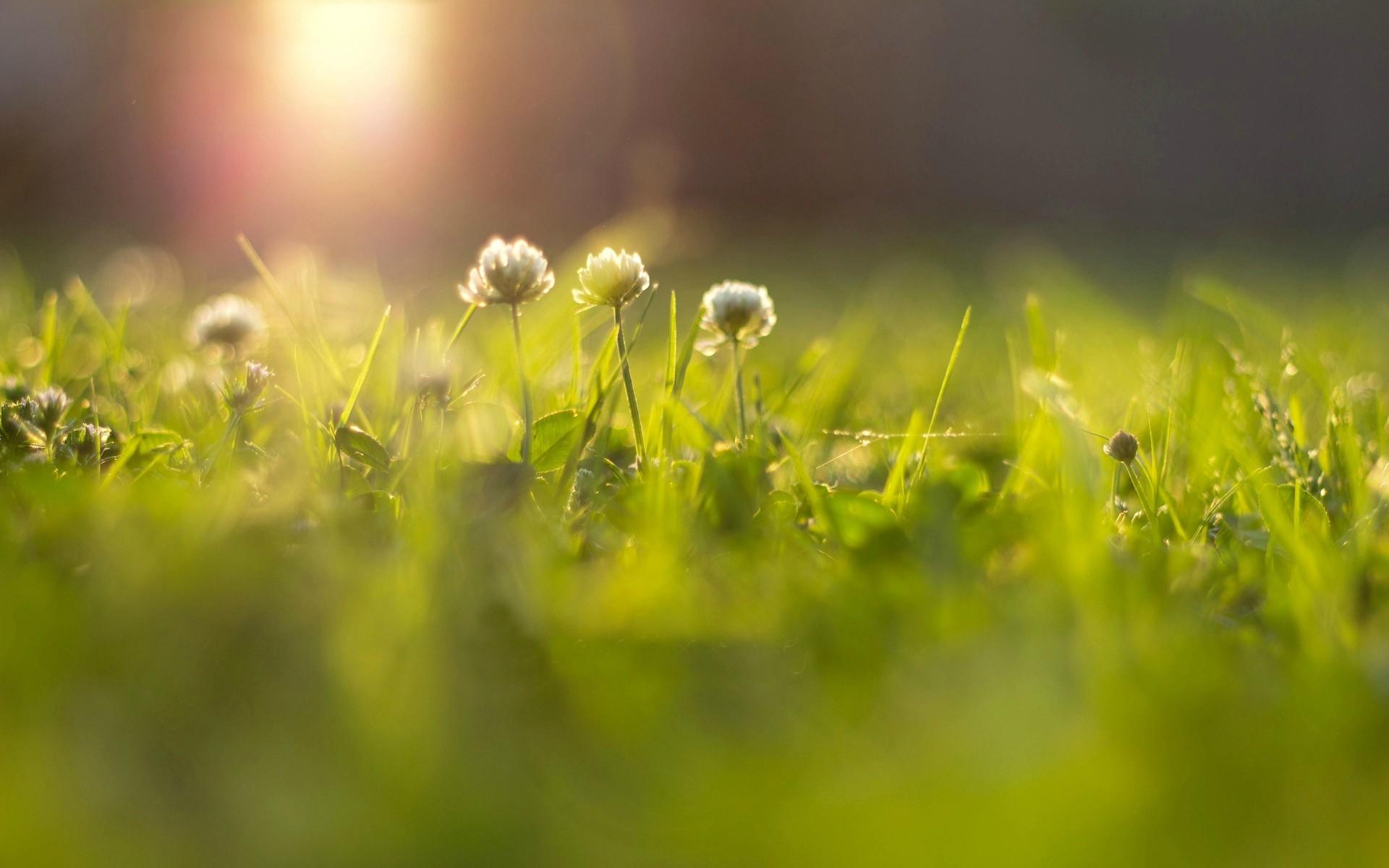 tavaszi akcio